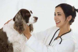 Способы лечения аллергии у собак