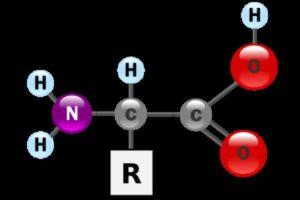 Аминокислоты — основные понятия