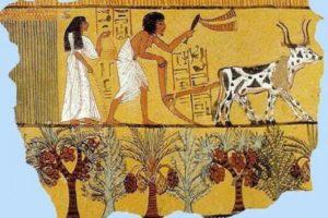 Древние земледельцы в Египте. Древний Египет: земледелие