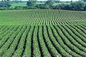 Земли сельхозназначения: продажа, аренда, перевод в ИЖС, стоимость, налоги, разрешенное использование и строительство
