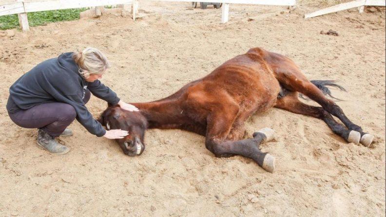 Вред знахарского лечения животных