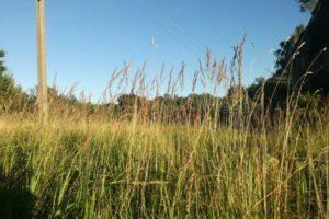 Как земли сельхозназначения перевести в земли промышленности?