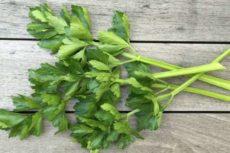 Сельдерей листовой: польза и вред, полезные свойства