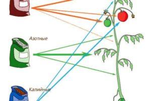 Хлористый калий/хлорид калия как удобрение, свойства и применение