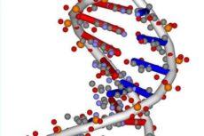 Нуклеотид — это что такое? Состав, строение, число и последовательность нуклеотидов в цепи ДНК