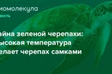 Тайна зеленой черепахи: высокая температура делает черепах самками