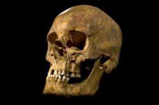 Анатомия — это что за наука? История развития анатомии