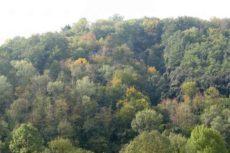 Смешанные и широколиственные леса. Климат смешанных и широколиственных лесов