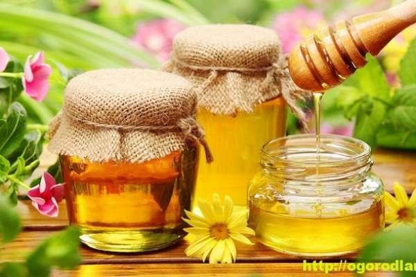 Применение меда в народной медицине