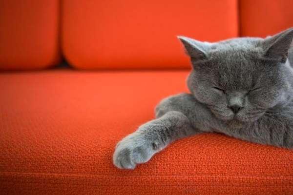 Как убрать запах кошачьей мочи на диване: 7 способов устранения вони навсегда!