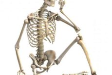 Основные типы соединения костей человека: схема и таблица
