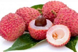 Экзотический фрукт личи: польза и вред. Чем полезна кожура личи