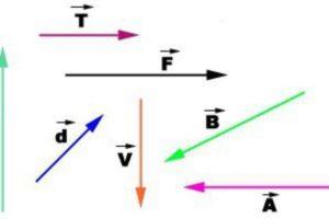 Векторная величина в физике. Примеры векторных величин
