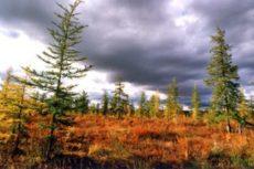 Природные зоны России, их особенности