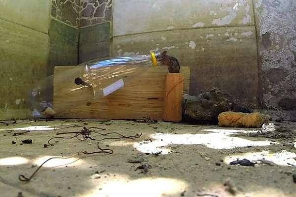 Ловушка для мышей из пластиковой бутылки