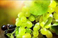 О сортах грузинского винограда
