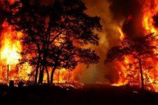 Лесные пожары: причины возникновения, виды и последствия