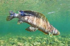 Снасти на хариуса: советы и рекомендации что выбрать и как самостоятельно сделать для отличной рыбалки