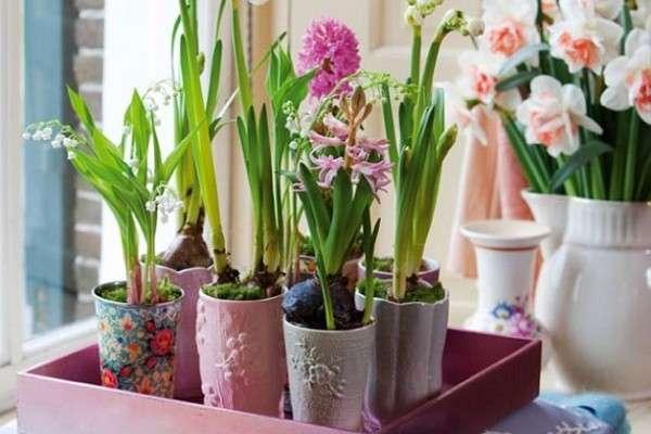 Выращивание луковичных цветов зимой