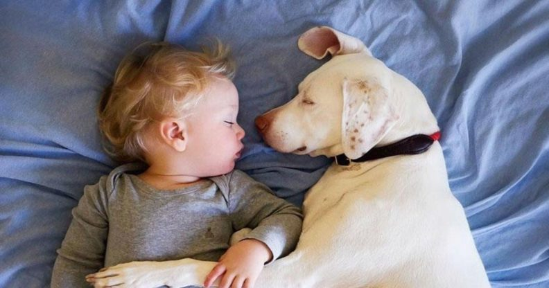 Как подружить ребенка и собаку