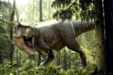 Все виды динозавров с названиями, их описание