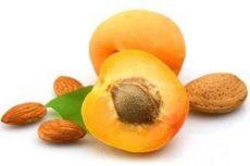 Абрикос: виды и сорта, калорийность и пищевая ценность, вред и польза. Приготовления и применение абрикоса в медицине