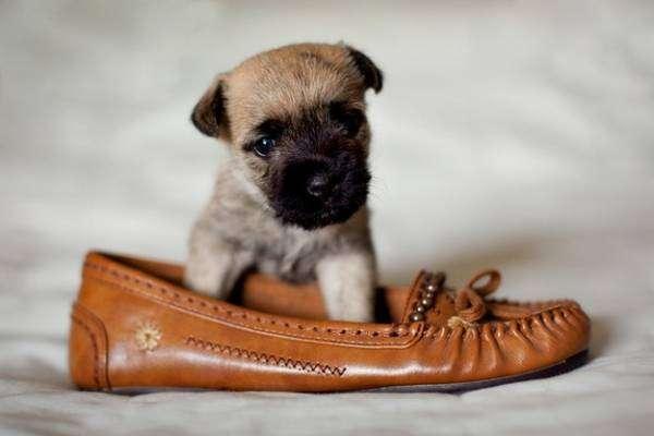 Делаем обувь для собаки своими руками — выкройки и пояснения к ним