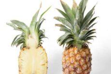 Хранение ананасов в домашних условиях. Как хранить ананас