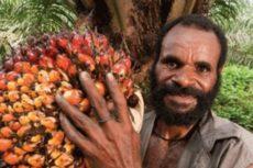 Чем опасно наводнившее Россию пальмовое масло
