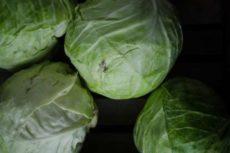 Когда солить капусту на зиму? Как и когда правильно солить капусту