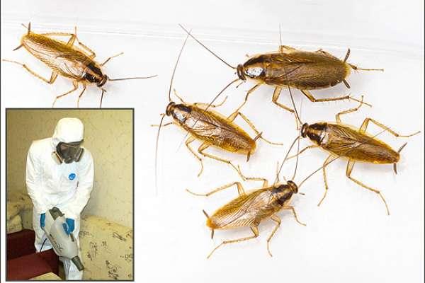 Обработка помещений от насекомых: цены, отзывы и особенности процедуры