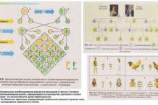 Законы независимого наследования признаков. Законы Менделя. Генетика