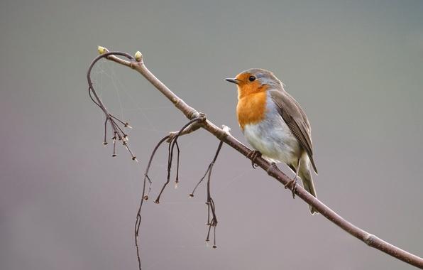 Внешние особенности разных видов птиц