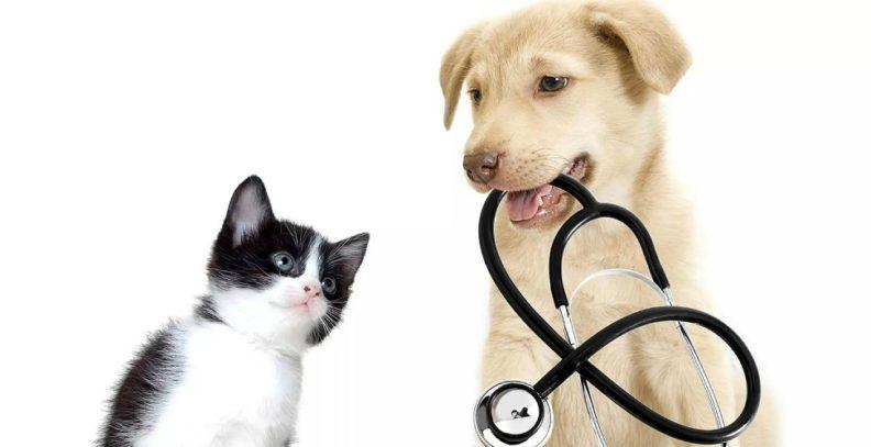 Ветеринарная клиника Айболит +
